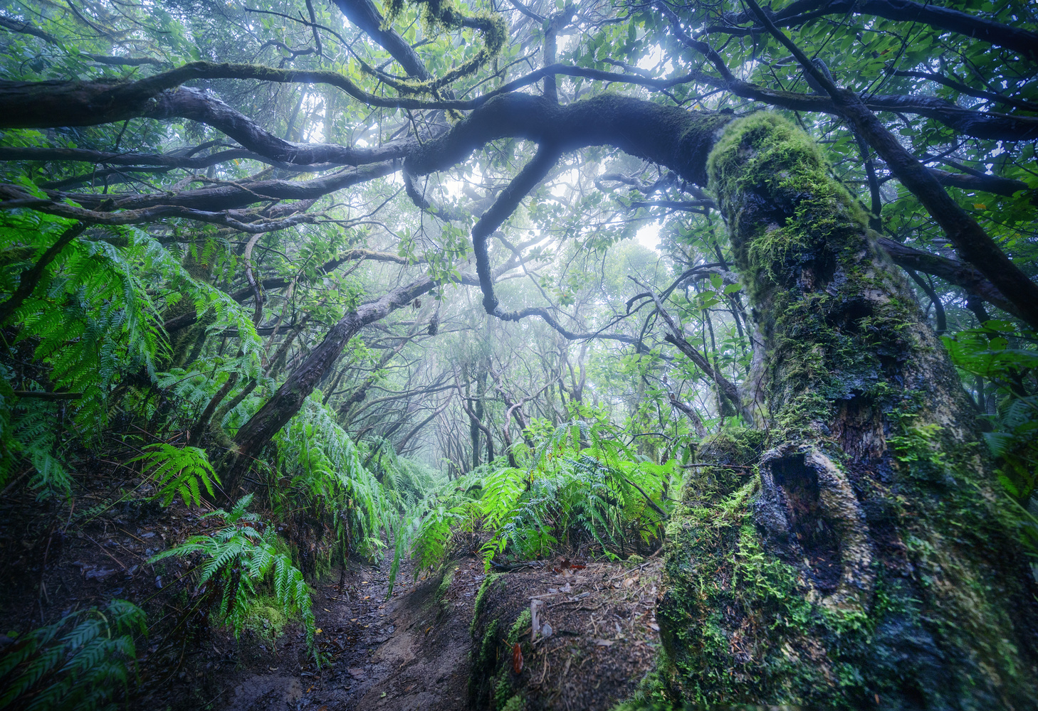 The Enchanted Forest by DaniGviews /Daniel