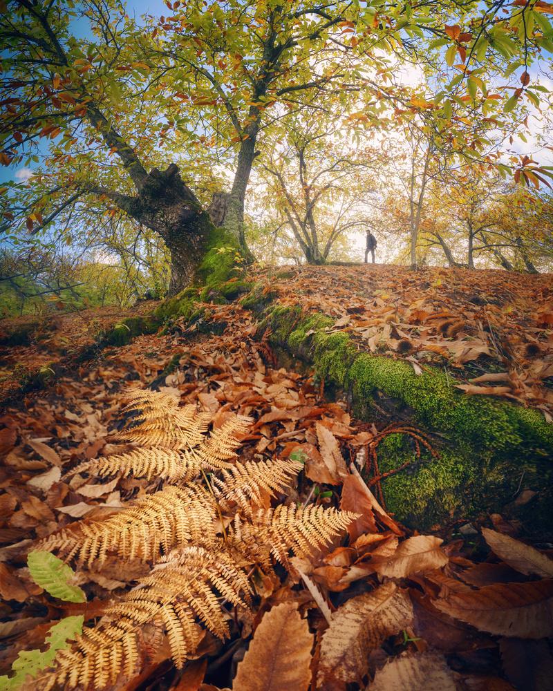 Autumn prominence mosaic by DaniGviews /Daniel