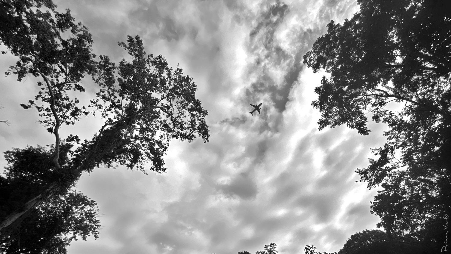 Airplane Overhead b/w by Warren Marquez