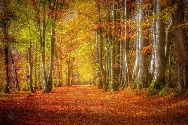 Autumn by Jane Morrison