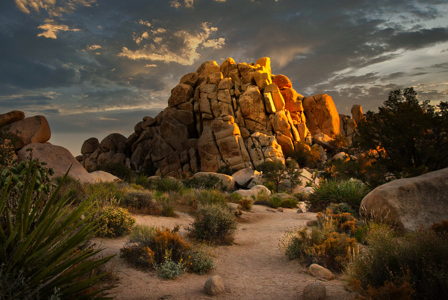 Sunset-Joshua Tree by J. Daniel Jenkins