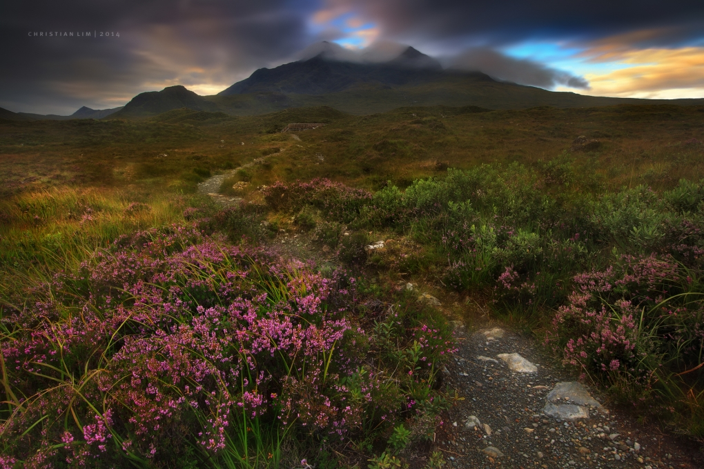 Horns and Heather by Christian Lim