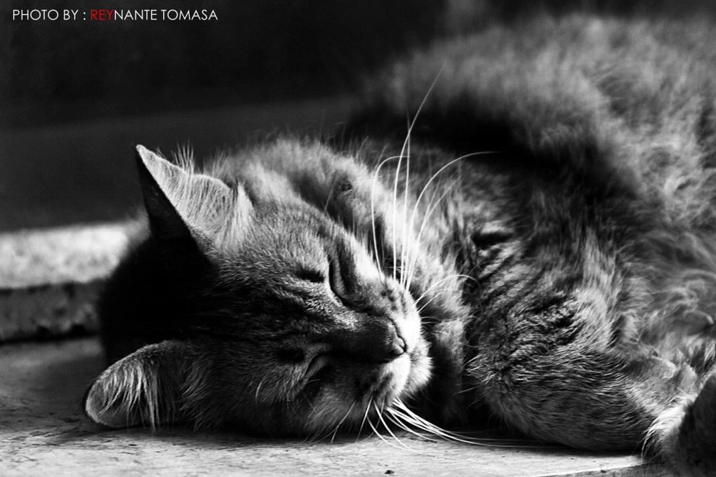 Pet by Reynante Tomasa