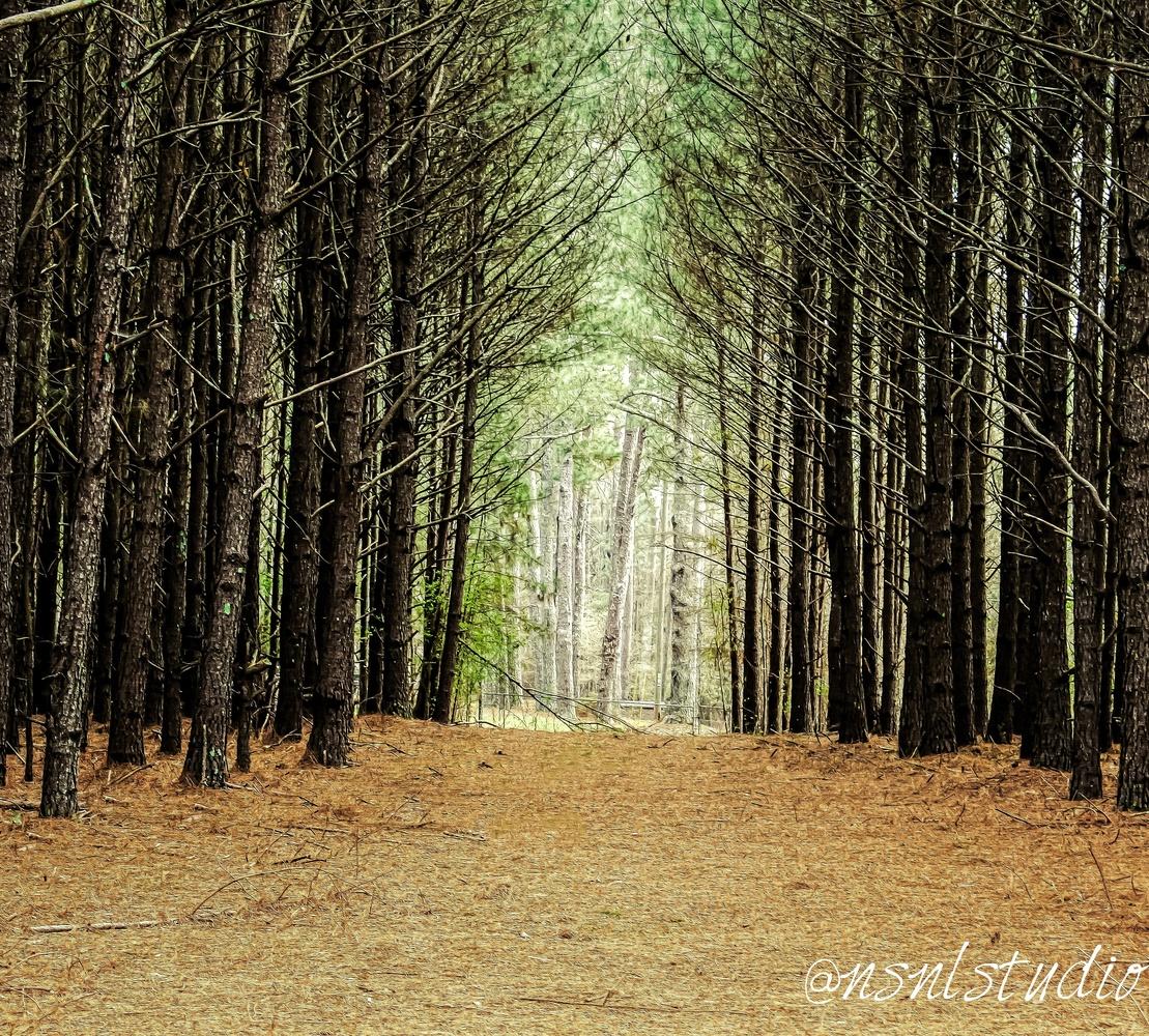 Forrest by Devarr Odom
