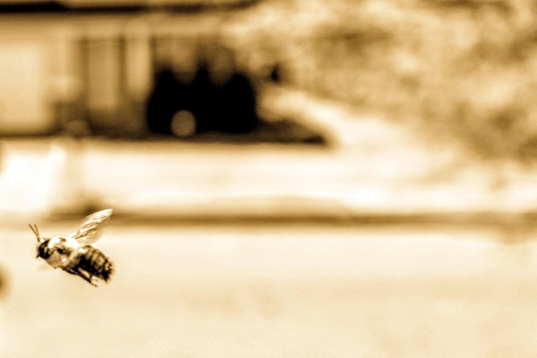 Bee easy by Devarr Odom