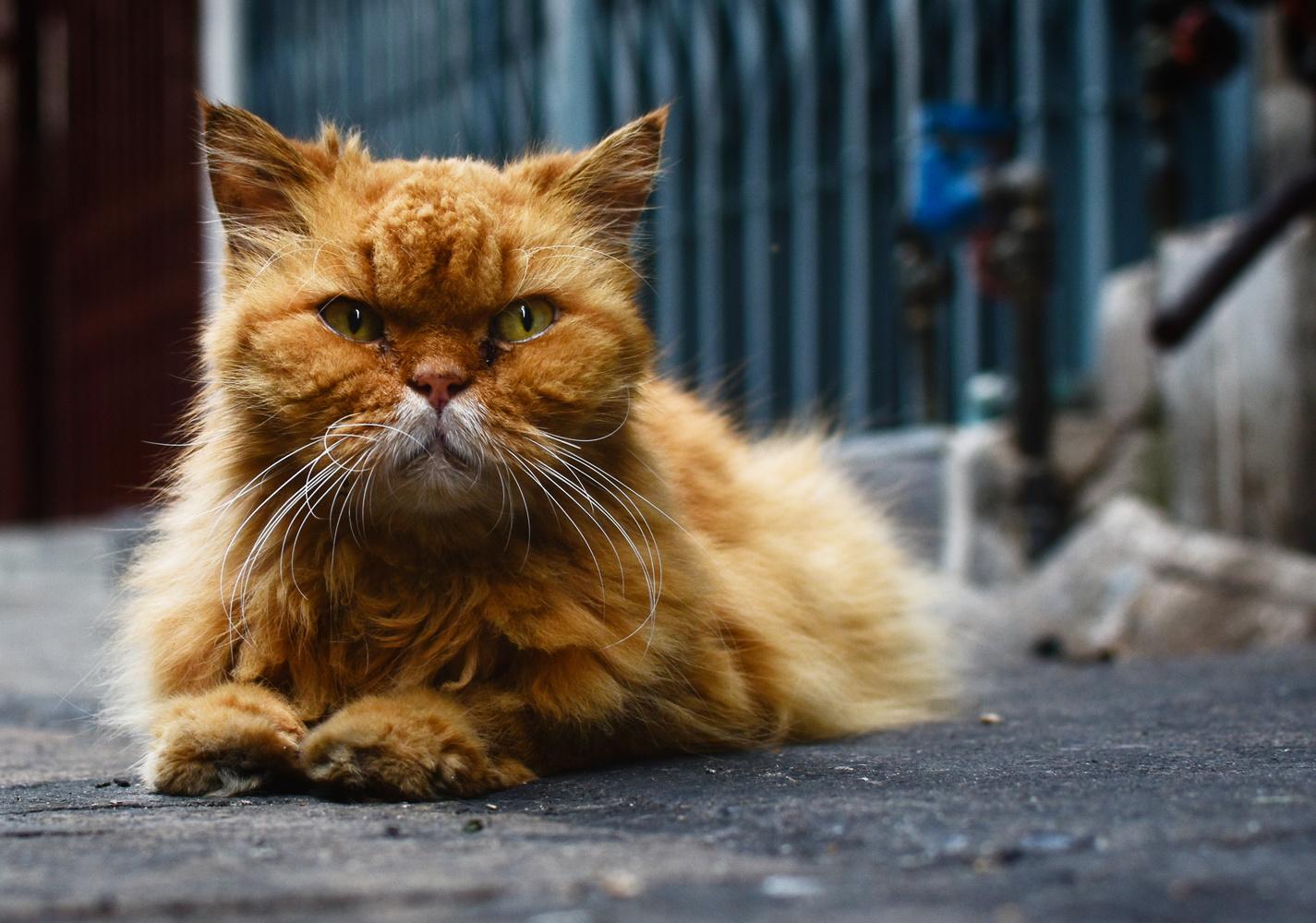 Garfield's Grandad by Will Ambeault