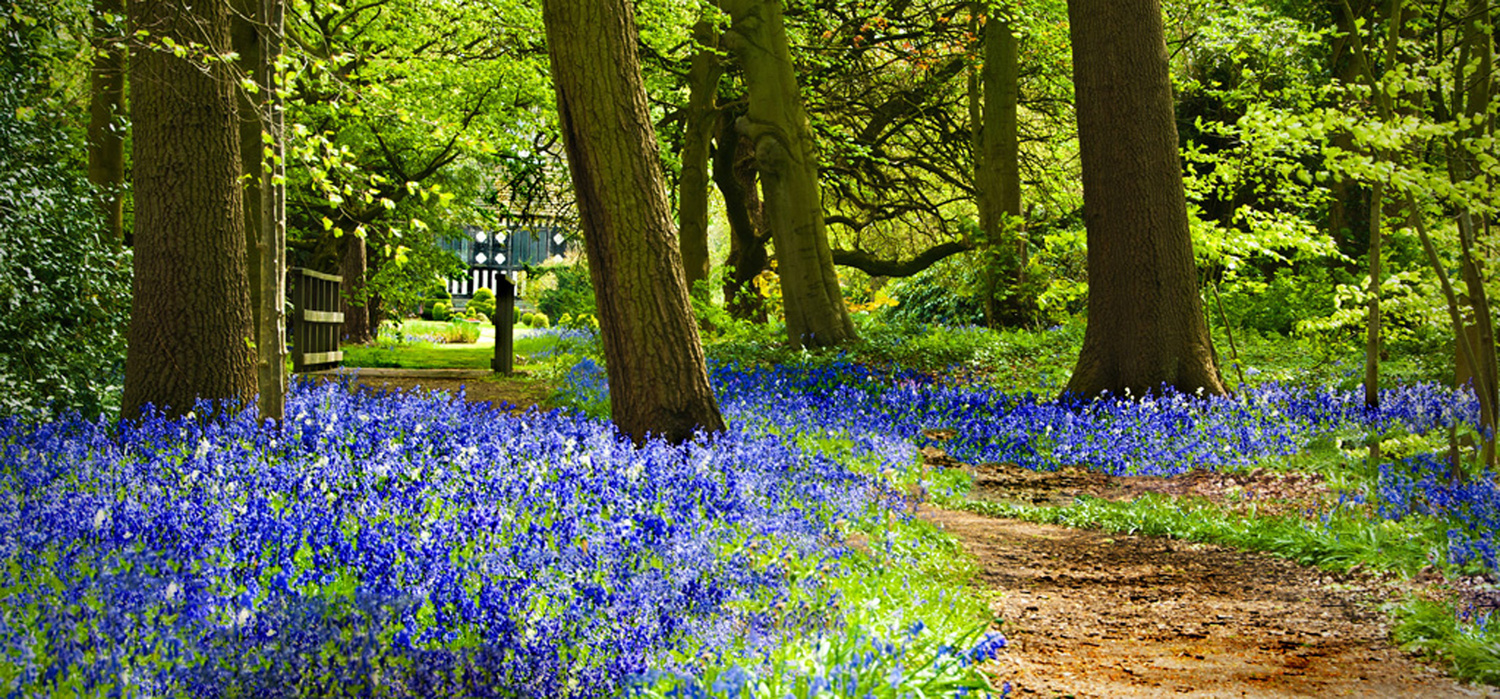 Bluebell Wood by Peter Jarvis