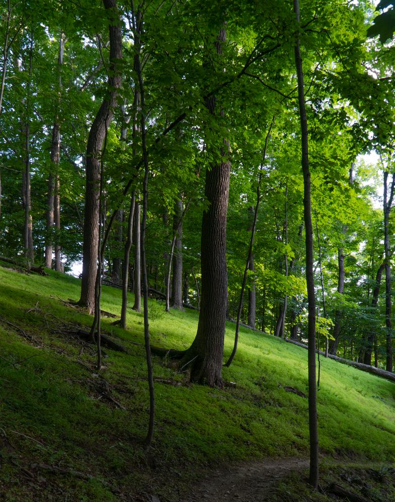 Trees by Patrick Bennett