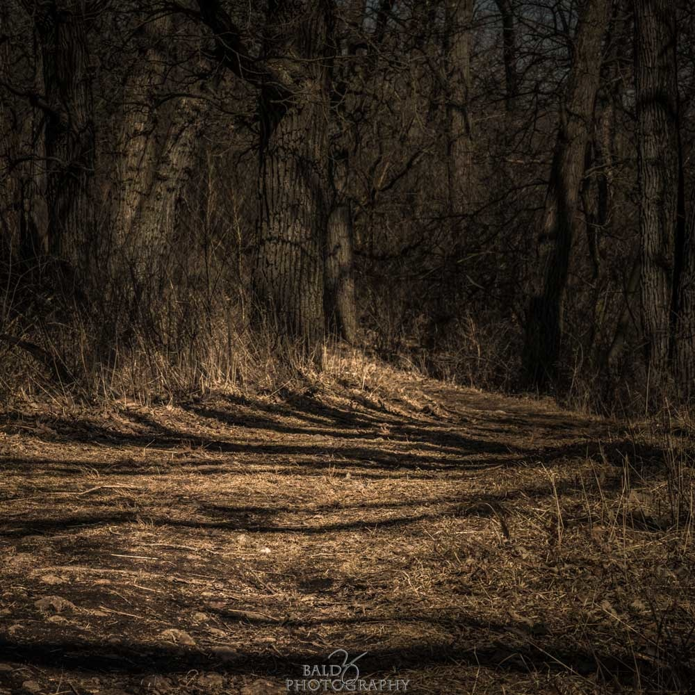 Wooded Path by Robert Zilch