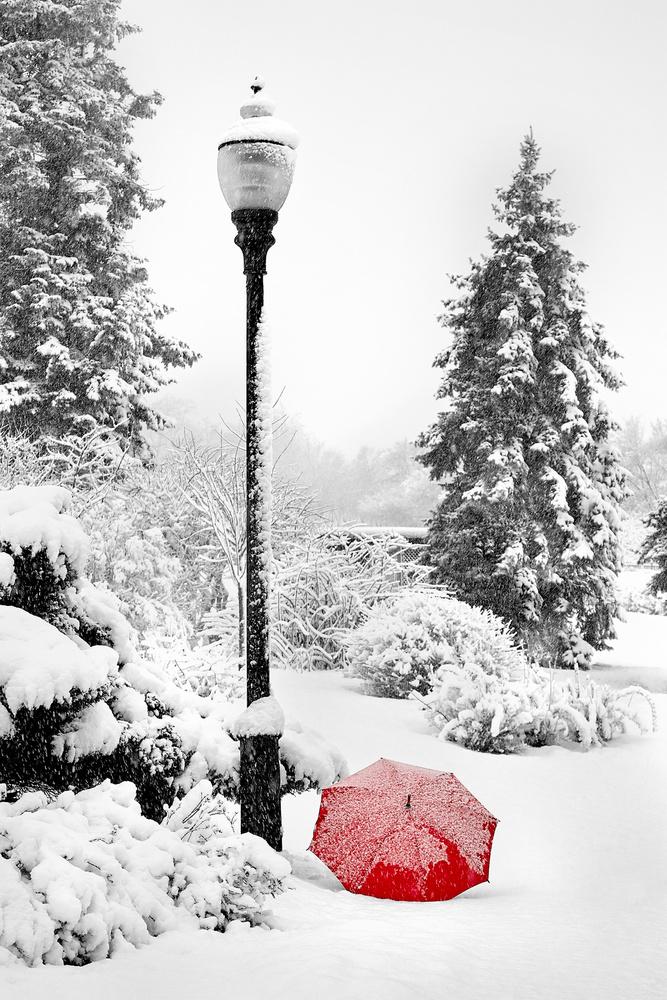 Narnia - RED Umbrella Series by Hank Rintjema