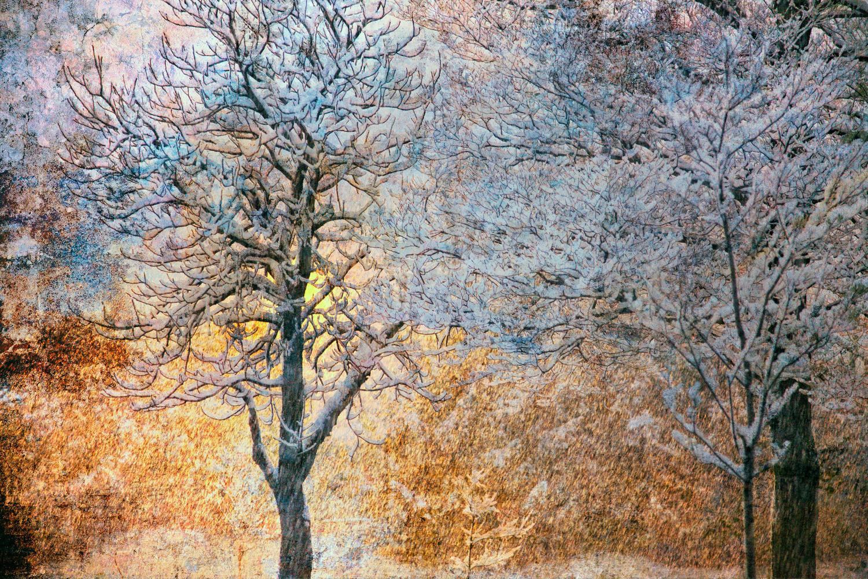 Trees in Snowstorm by Hank Rintjema