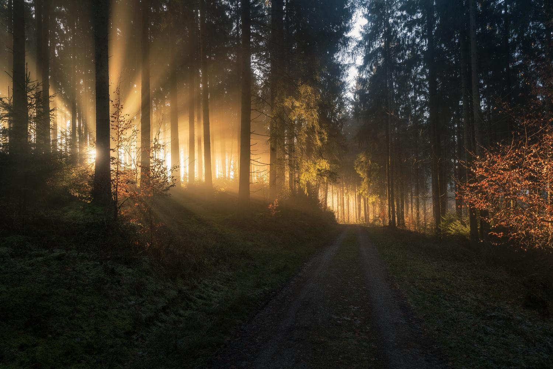 Light Rays by Christian Möhrle