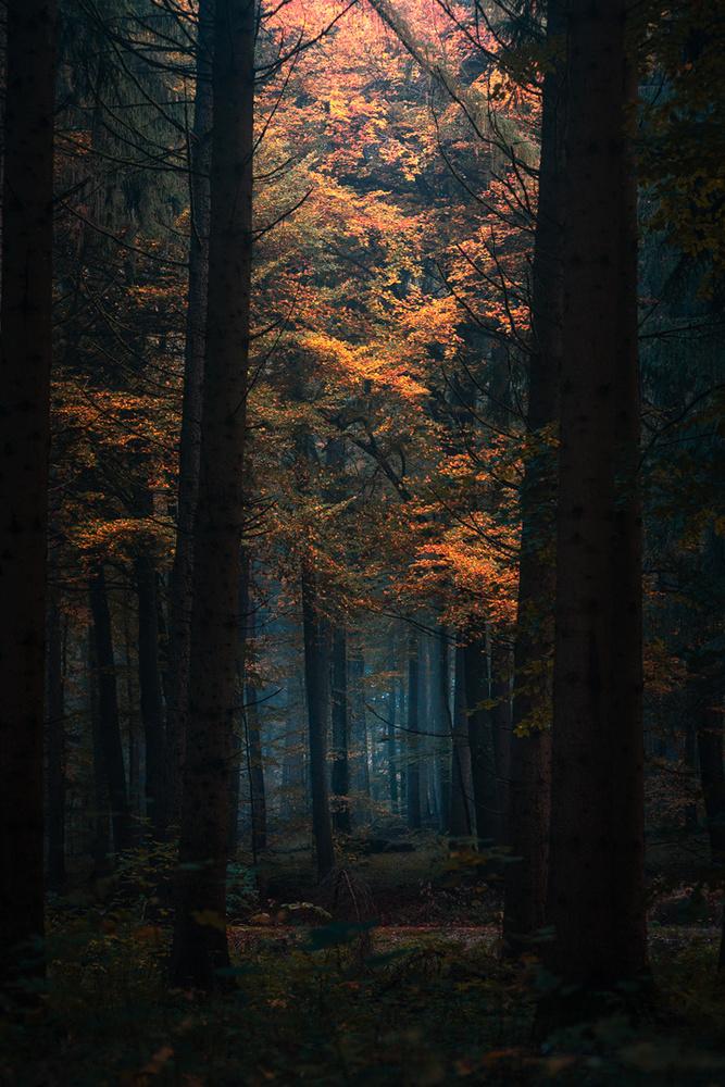 Autumn Forest by Christian Möhrle