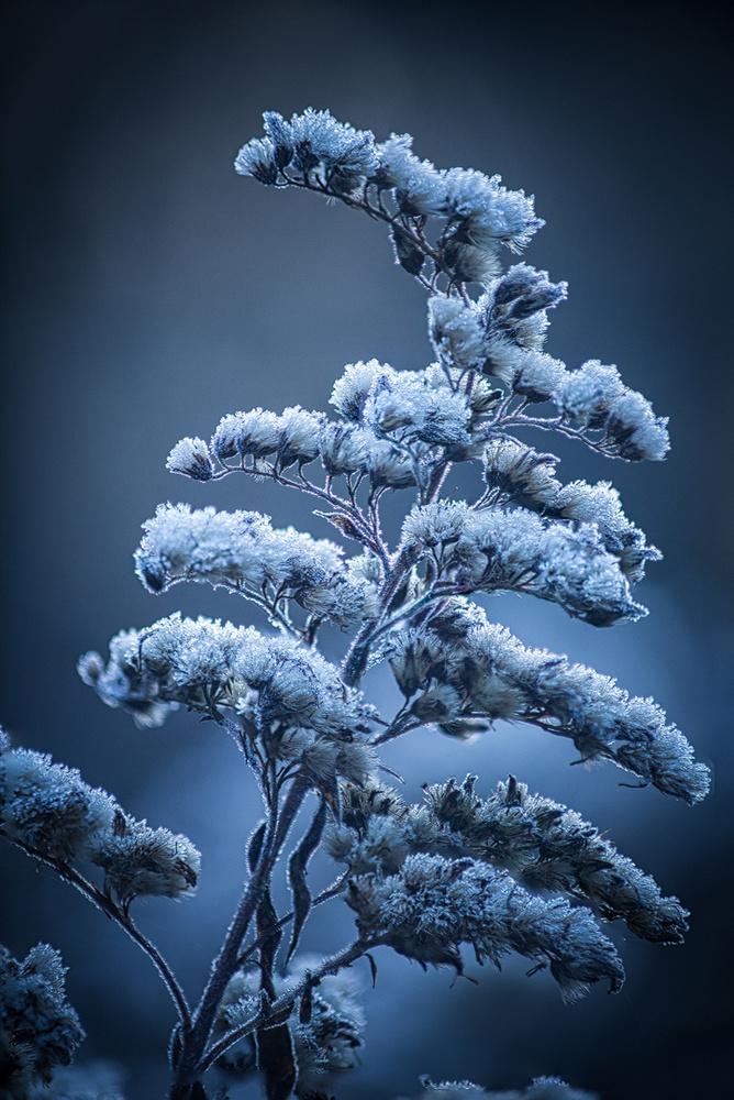 Frosty morning by Christian Möhrle