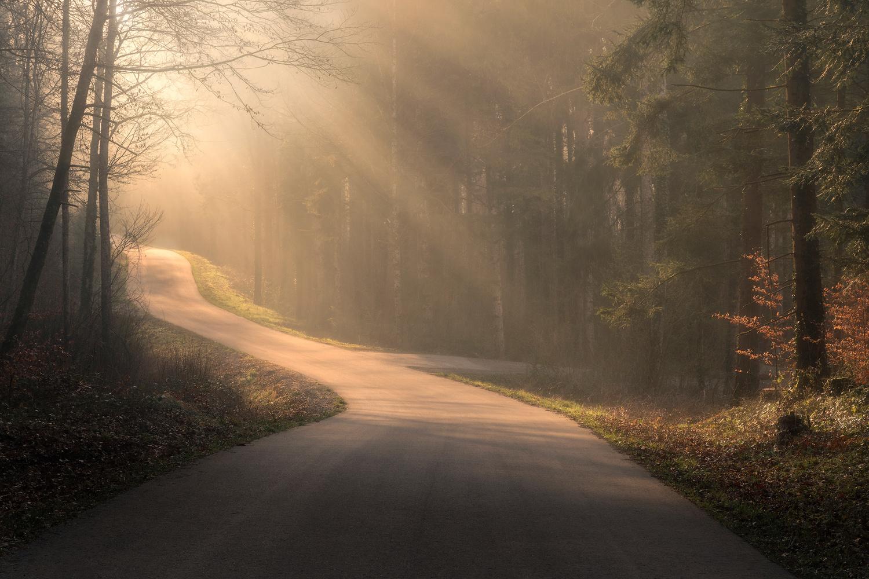 Foggy Sunrise in the Woods by Christian Möhrle