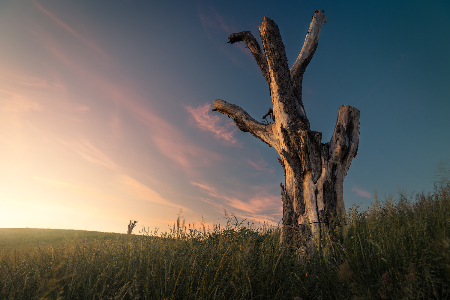 Lonely tree on a hill by Christian Möhrle