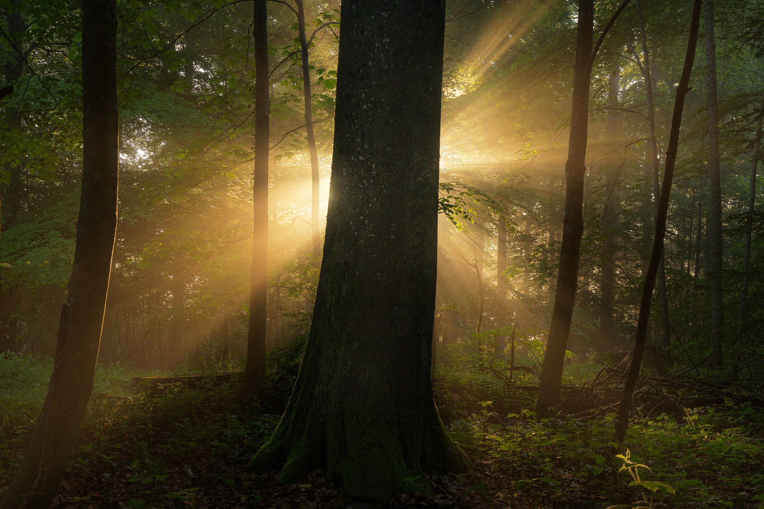 Burst of Light by Christian Möhrle