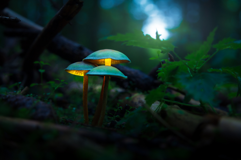 Glowing Mushrooms by Christian Möhrle