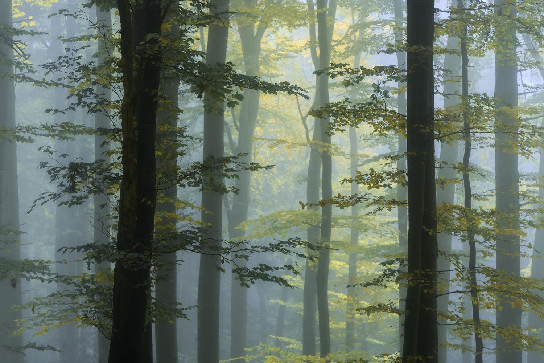 Foggy Forest by Christian Möhrle