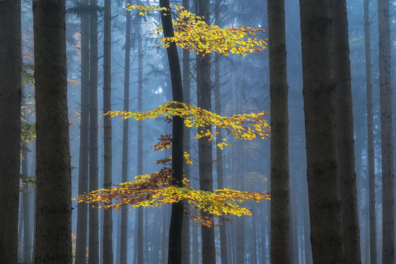 Autumn Colors by Christian Möhrle