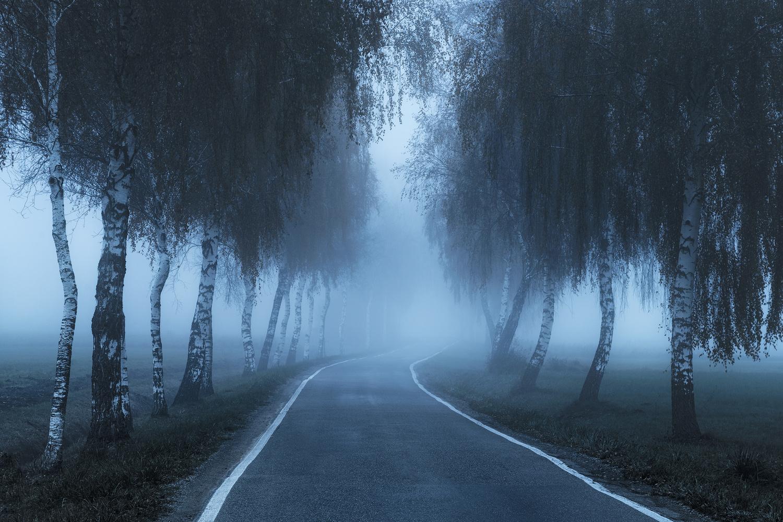 Foggy Autumn morning by Christian Möhrle