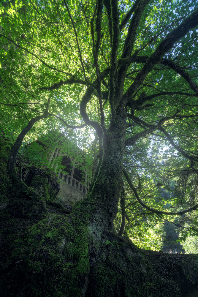 Dreamy Forest by Christian Möhrle