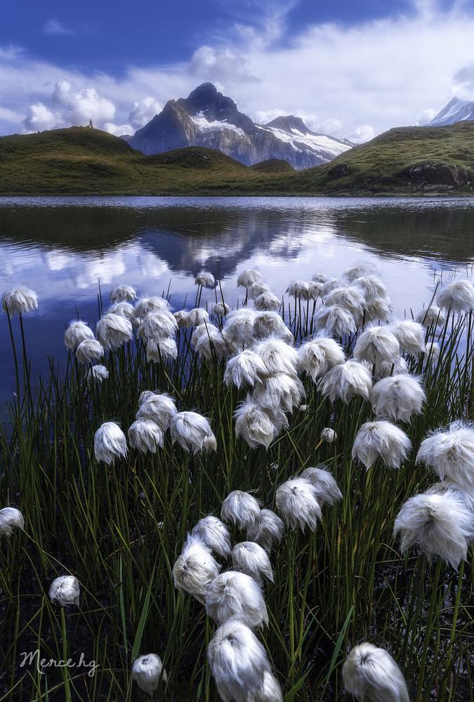 Between cottons by Merce Hernando