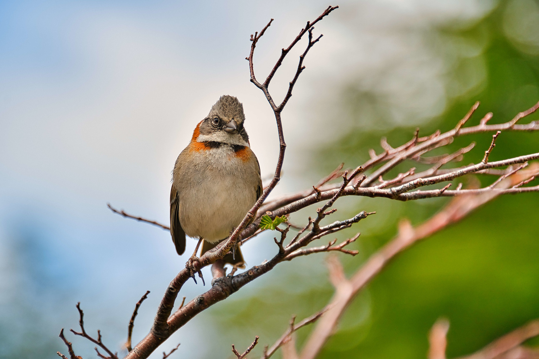Patagonia Wildlife Bird by Marko Jovanovic