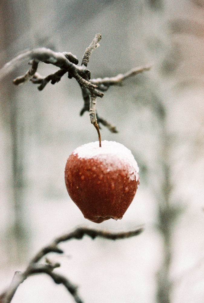 Forbidden fruit by Ulysse DAESSLE