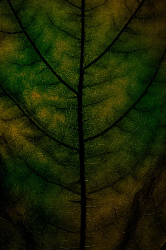 Untitled 4 by Devin Martino-Atsatt