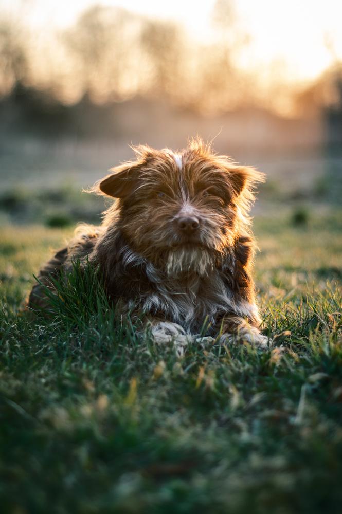 "My ""Misiek"" - Kind of a mop dog. by Adrian Wiechnik"