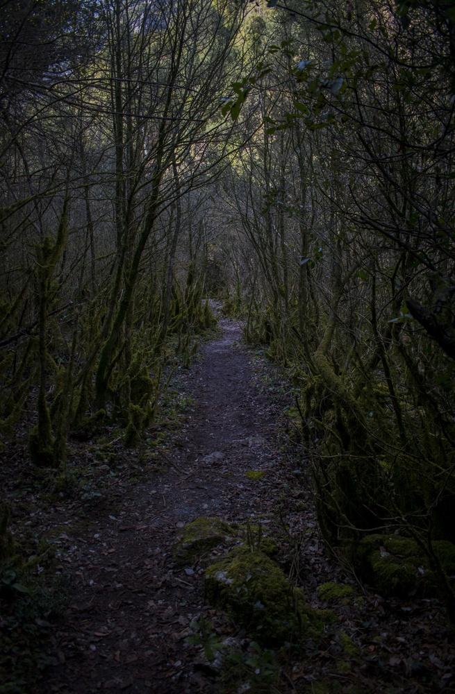 The dark path by George Miteletsis