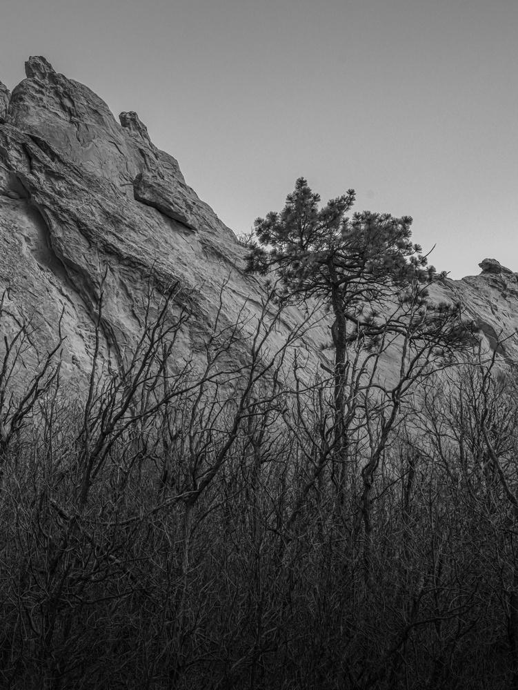 Skinny Tree by John Burgar