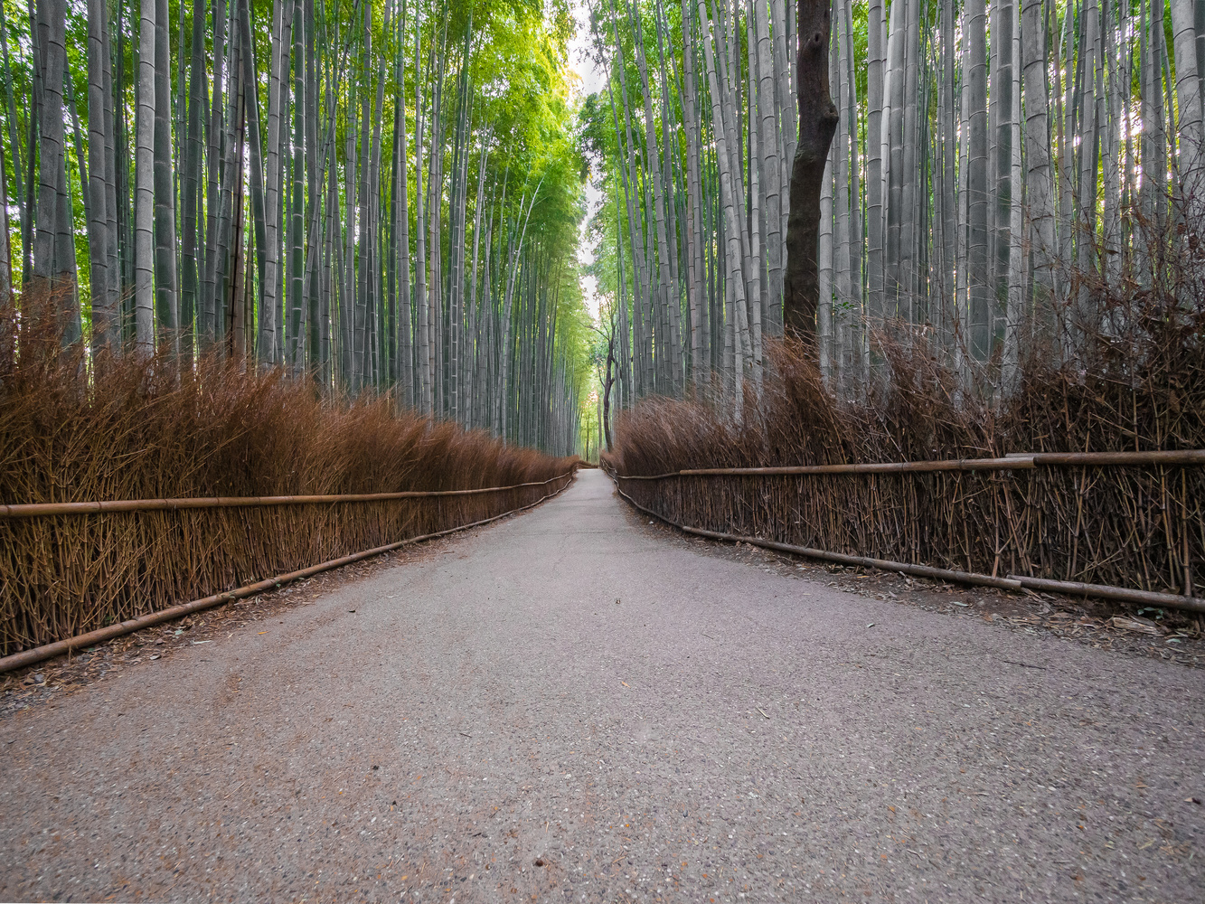 Bamboo forest by Jerzy Wolochowicz