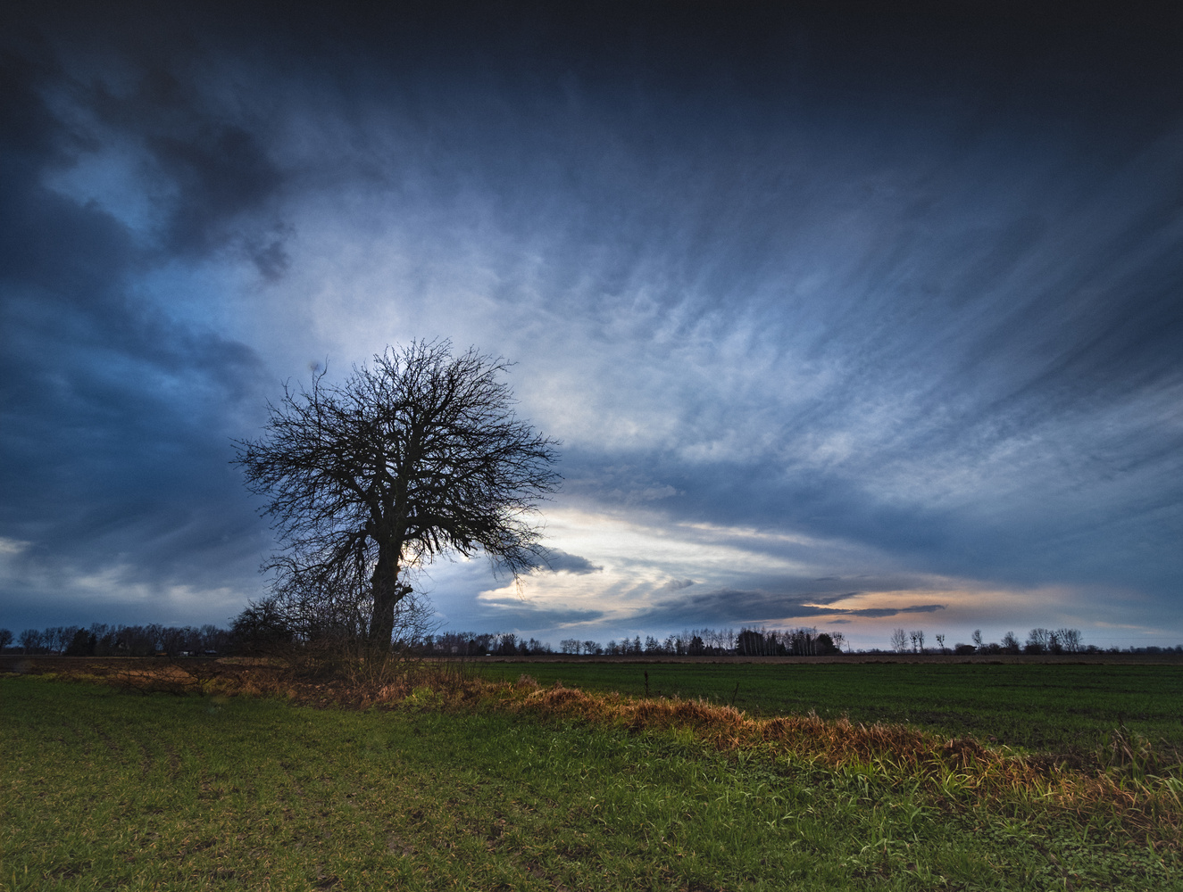 Trees by Jerzy Wolochowicz