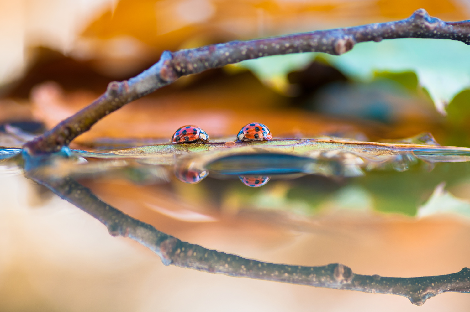 Fall reflections by Atul Saluja