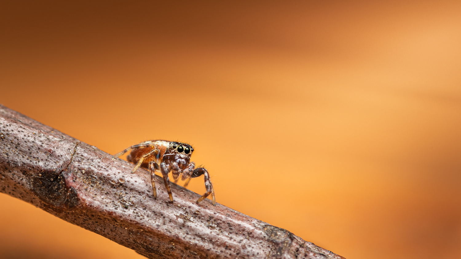 Sneak out by Atul Saluja