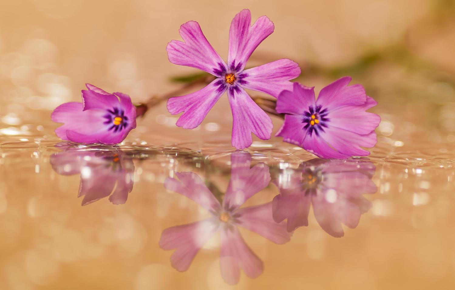 Reflections by Atul Saluja