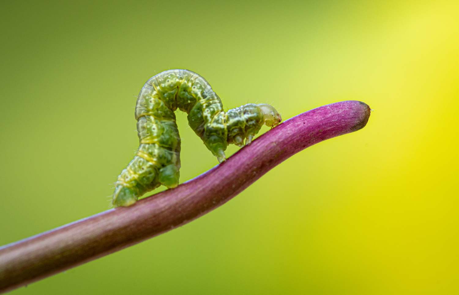 Slow and steady by Atul Saluja