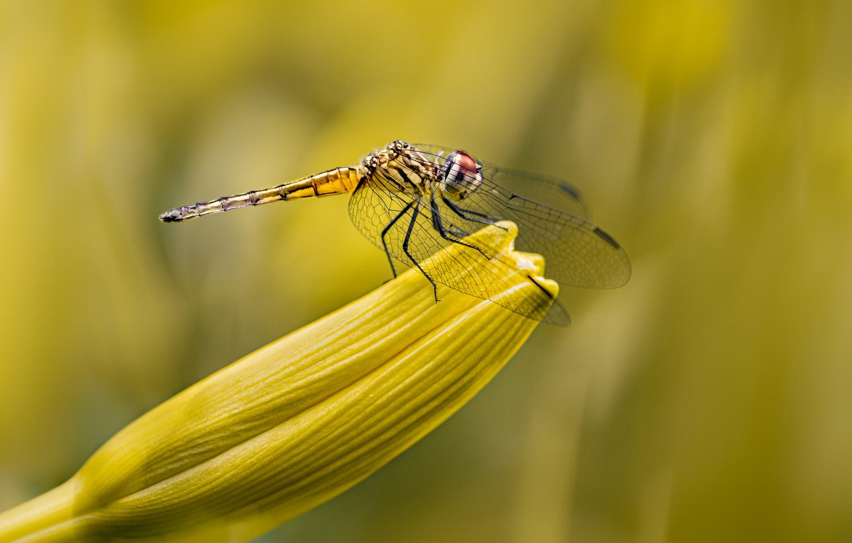 The yellow skimmer by Atul Saluja