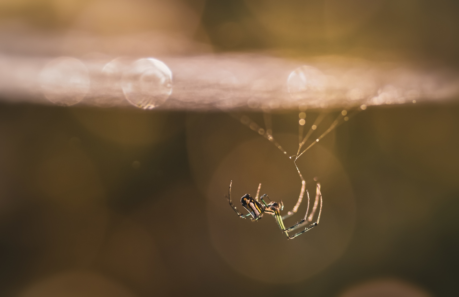 Hanging by a thread by Atul Saluja