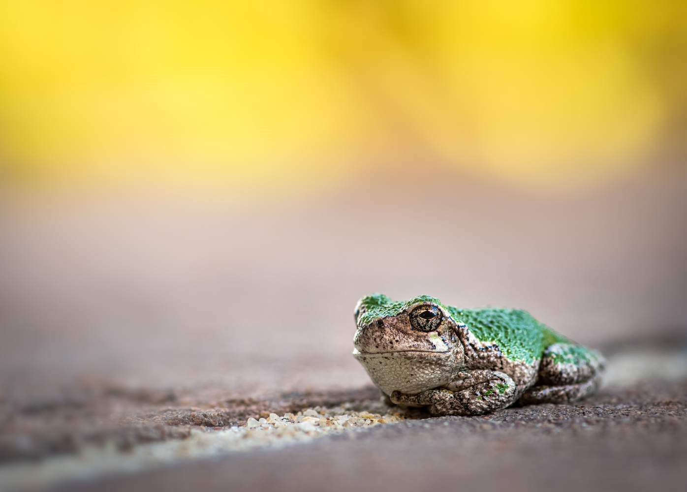 Why'd you wake me up? by Atul Saluja