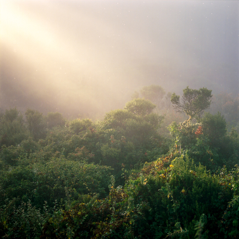 Santa Cruz Mountains by Adam Ottke