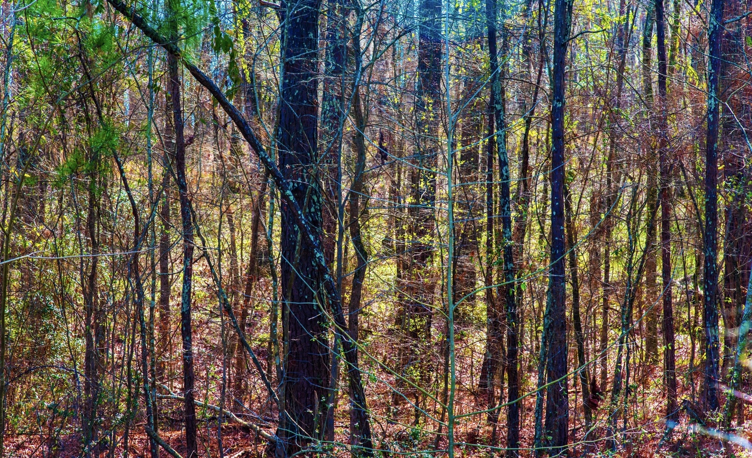 Forest In The Fall by Steve Gaines