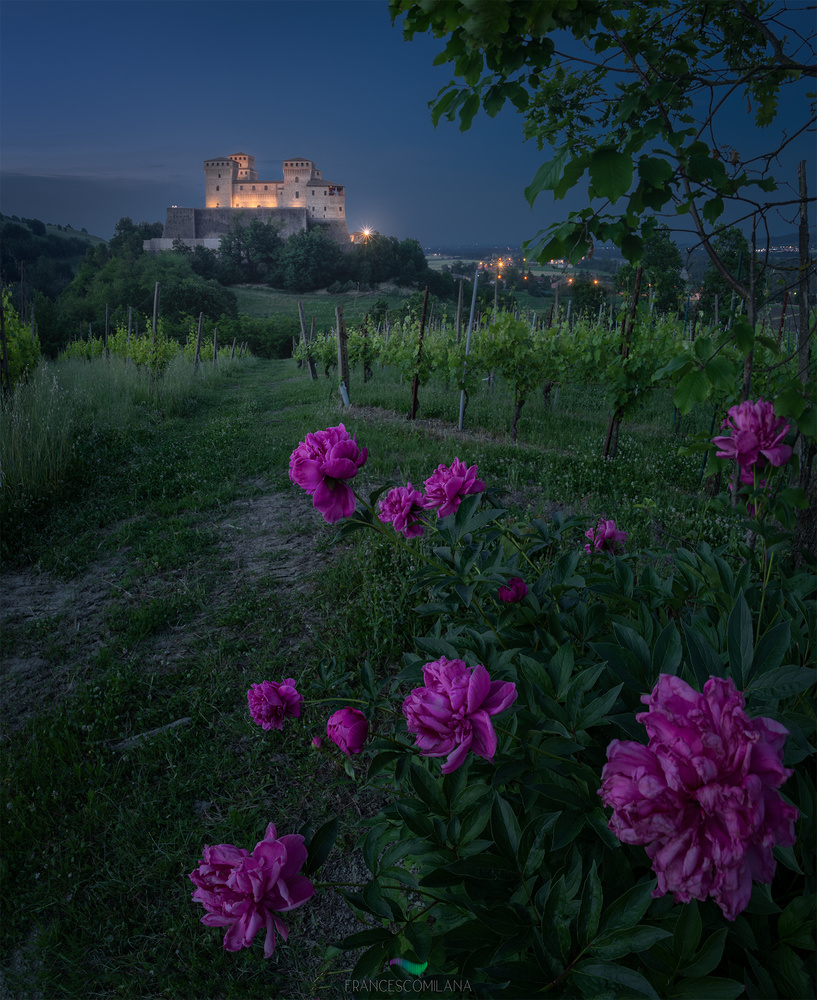 Peonies at Blue Hour by Francesco Milana