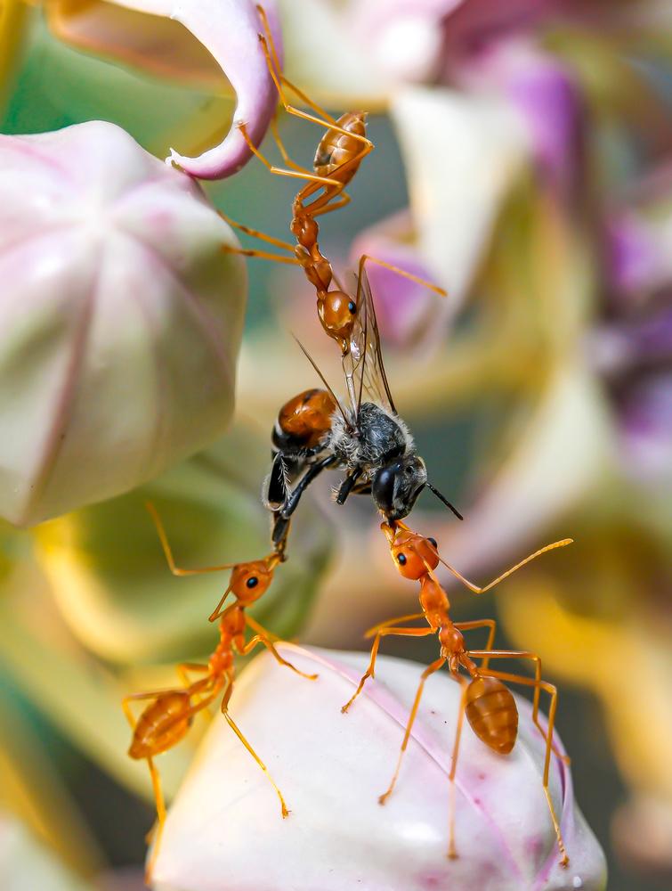bee-mine by Hardeep Solanki