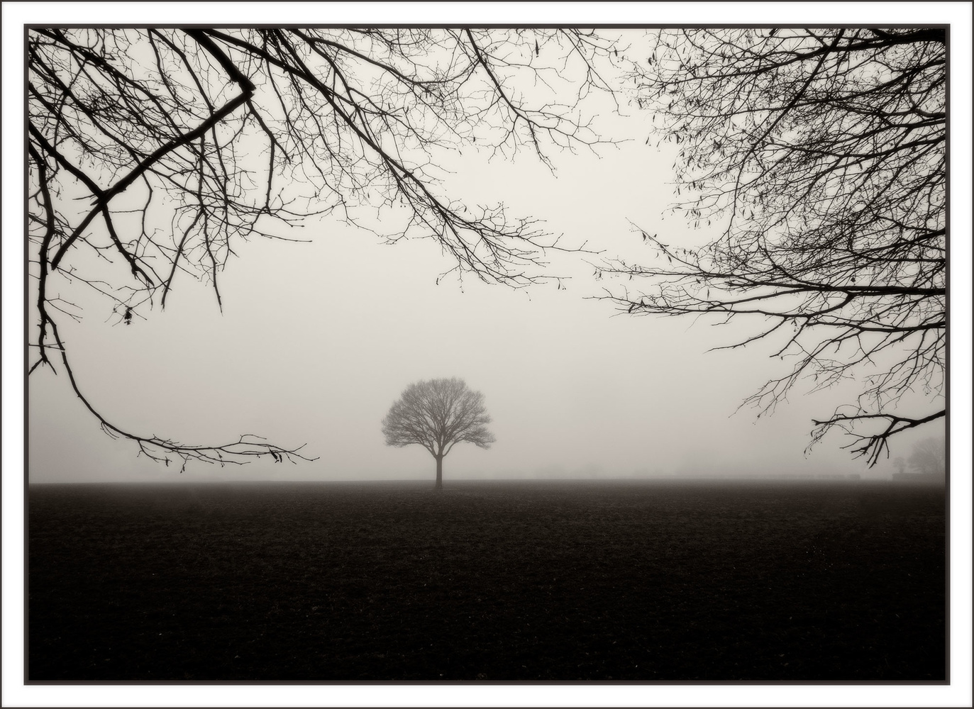 Winters Tree by Anthony Hepworth
