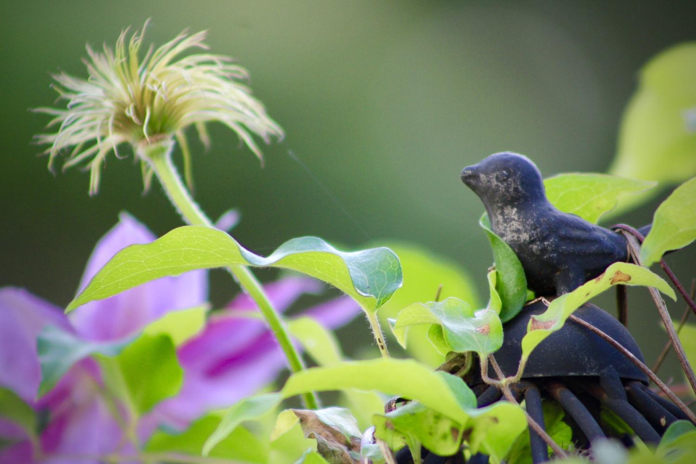 Bird longing for flower by Rodney Vaughn