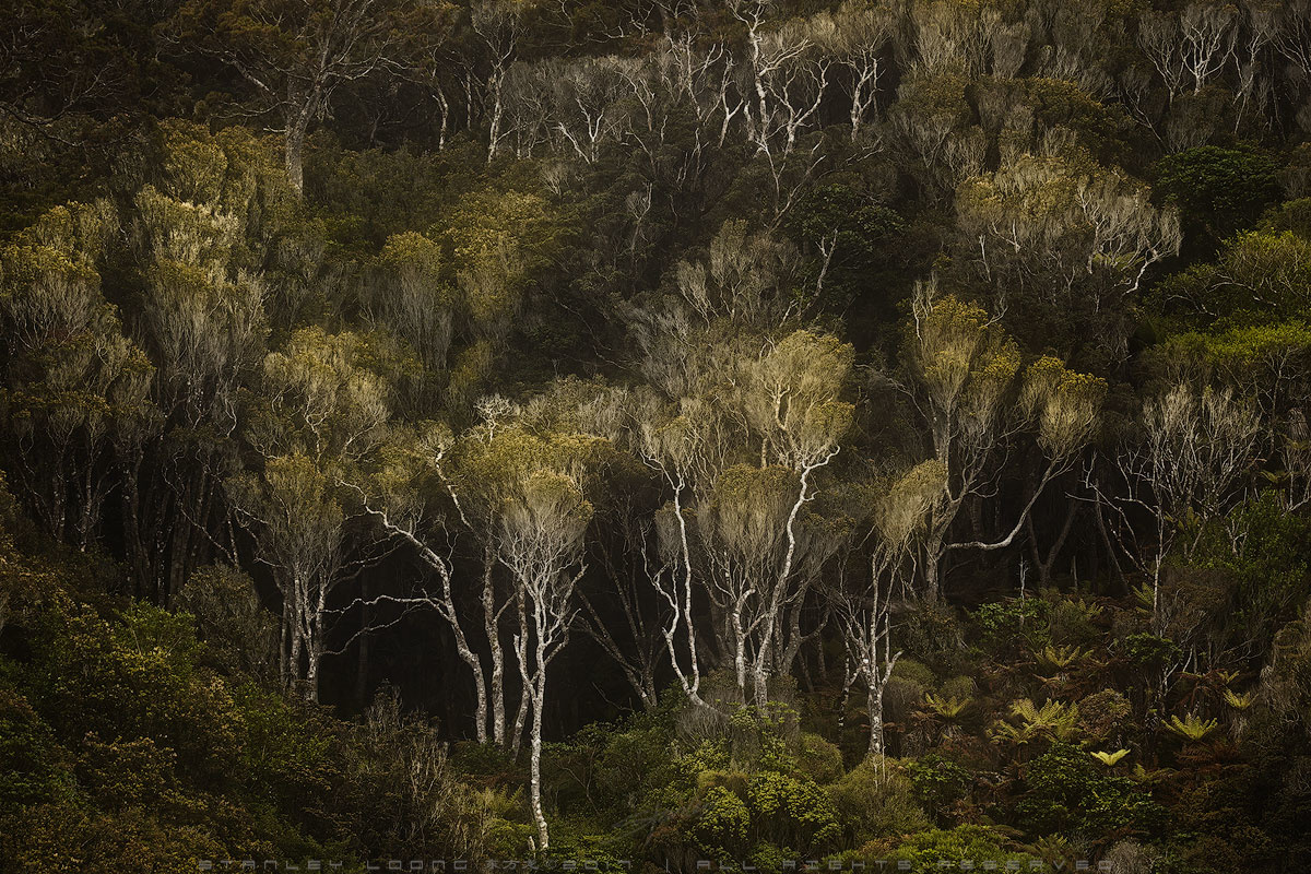 Dark Forest by Stanley Loong