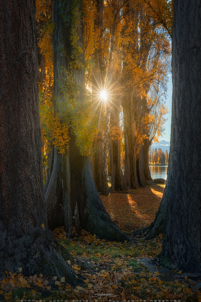 Sunny Glow by Stanley Loong